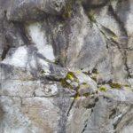 fiberglass rock panel